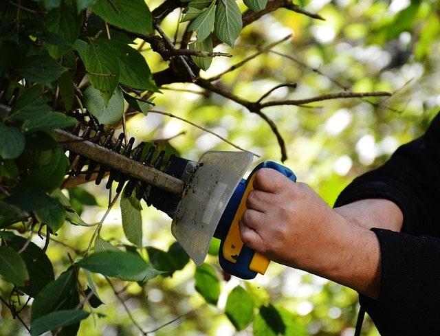 service personne jardinier