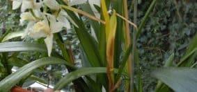 Comment tailler une orchidée