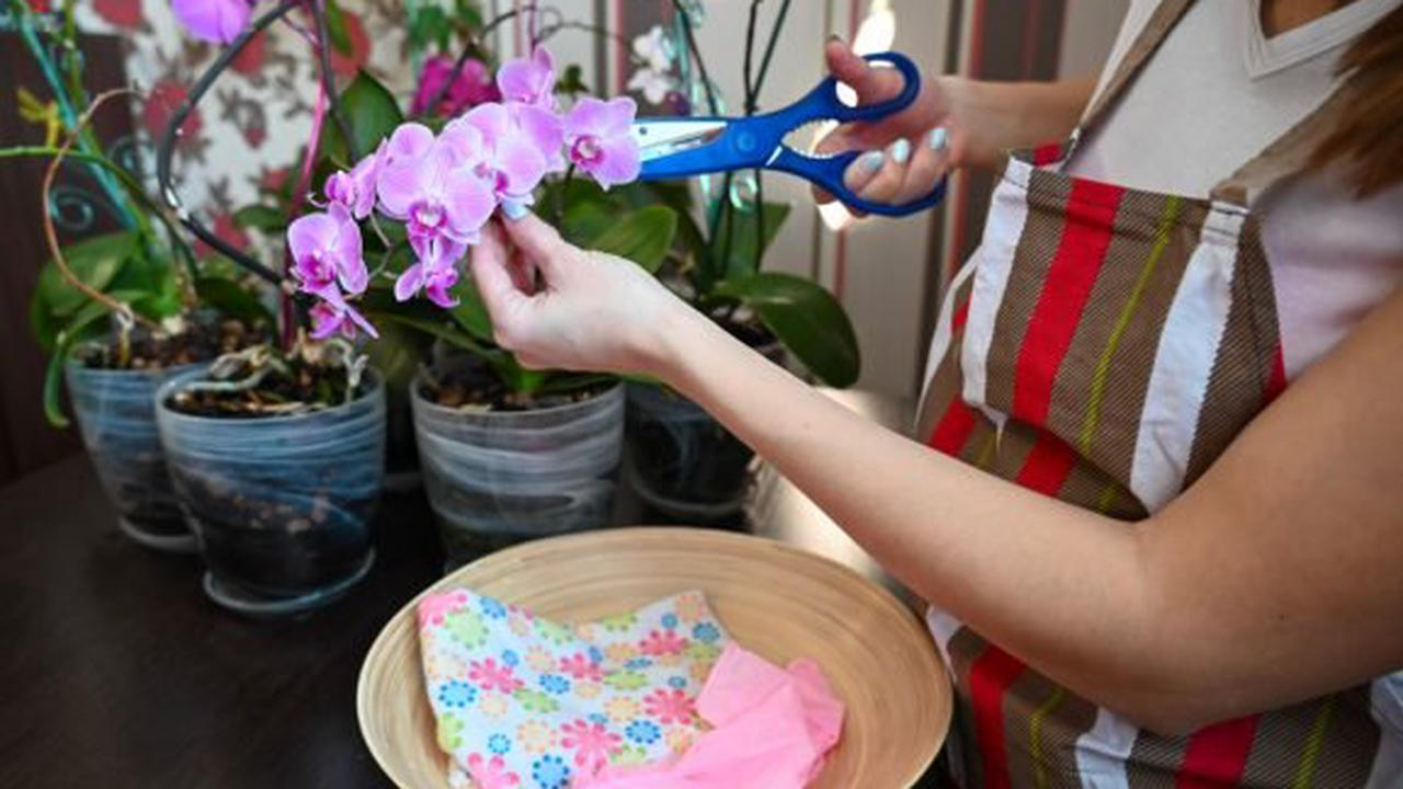 tailler orchidée